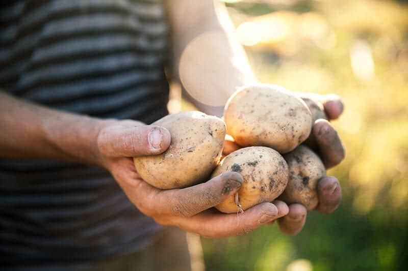 produit locale alsace pomme de terre